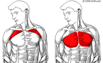 Upper Lower Chest Mindtomusclefitness