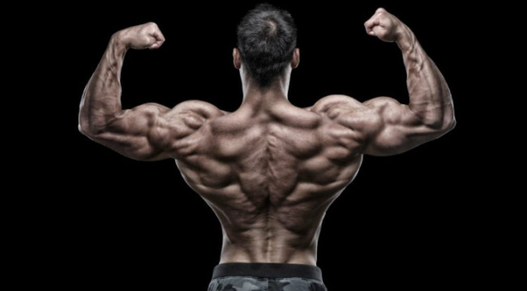 The Complete A Z List Of The Best Back Exercises Mindtomusclefitness